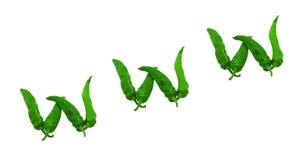 Www- tekst die uit groene paprika's wordt samengesteld Royalty-vrije Stock Foto