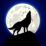 Wyć wilka Zdjęcie Royalty Free