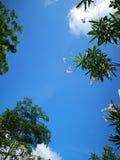Wyłącznie niebieskie niebo z zielonym drzewem i czerwonym kwiatem zdjęcia stock