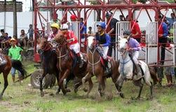 wyścig koni przewodów konia trzy zaokrągla się Obrazy Royalty Free