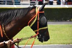 wyścig koni przewodów konia trzy zaokrągla się Fotografia Royalty Free