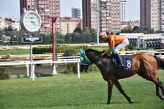 wyścig koni przewodów konia trzy zaokrągla się Obraz Royalty Free