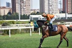 wyścig koni przewodów konia trzy zaokrągla się Zdjęcie Royalty Free