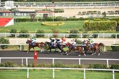 wyścig koni przewodów konia trzy zaokrągla się Obraz Stock
