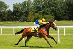 wyścigi konne Zdjęcie Royalty Free