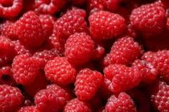 Wyśmienicie świeże i słodkie czerwone malinki jako karmowy tło Fotografia Stock