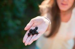Wyśmienicie Blackberry na dziewczyny ` s ręce Dziewczyna taktuje jagody w letnim dniu zdjęcia royalty free