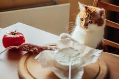 Wyśmienicie gość restauracji z serem, salami i pomidorami, zdjęcie stock