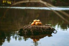 Wyśmienicie jabłka na wyspie Obraz Royalty Free