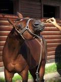 wyśmienicie koń Obrazy Stock