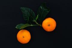 Wyśmienicie mandarynka Zdjęcia Stock