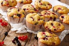 Wyśmienicie organicznie muffins z jagodowym mieszanki zakończeniem horyzontalny Obrazy Stock