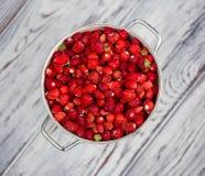 wyśmienicie truskawka dojrzałe owoce Zbieramy truskawki Obrazy Royalty Free