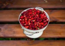 wyśmienicie truskawka dojrzałe owoce Zbieramy truskawki Fotografia Royalty Free
