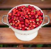 wyśmienicie truskawka dojrzałe owoce Zbieramy truskawki Zdjęcia Stock