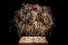 Wyśmienity kwiatu przygotowania z czerwonymi tulipanami obrazy royalty free