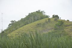 Wyż Uprawia ziemię w Mahayahay, Hagonoy, Davao Del Sura, Filipiny obraz royalty free