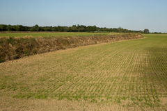 Wyżowa ryżowa kultywacja Zdjęcie Stock