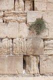 Wy ściana, Jerozolima, Izrael Zdjęcia Royalty Free