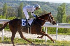 Wyścigi konny dla nagrody Zdjęcie Royalty Free