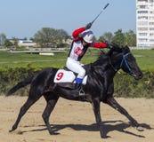 Wyścigi konny dla nagrody Fotografia Royalty Free