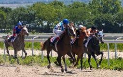 Wyścigi konny dla nagrody ogiera lek Obrazy Royalty Free