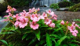 Wyżlinów kwiaty i menchia kwiaty Zdjęcia Royalty Free
