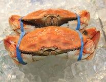 Wyśmienicie gotowany rockowy krab na lodzie Zdjęcie Stock