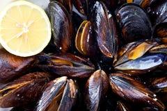 Wyśmienicie mussels Fotografia Royalty Free