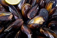 Wyśmienicie mussels Obraz Royalty Free