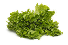 Wybór świezi mieszani zielonej sałatki liście Zdjęcia Royalty Free