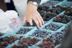 wybór rynek rolników jagodowych Obrazy Stock
