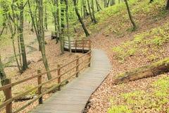 Wybieg w lesie obraz stock