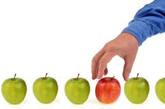 Wybiera jabłka na białym tle fotografia stock
