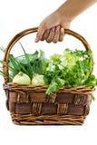 wybiera warzywa Obraz Stock