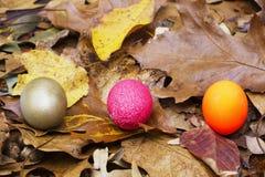 wyborów jajka gniazdeczko Obraz Royalty Free