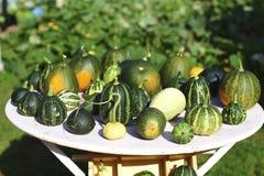 wyboru dyniowy zucchini Zdjęcia Stock