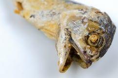 Wybrana ostrość głowa smażąca makrela na białym tle Obrazy Royalty Free