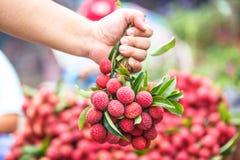 Wybrana ostrość na świeżym lychees chwycie ręką w Tajlandzkim rynku z powrotem Obrazy Royalty Free