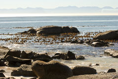 Wybrzeże Afryka - przylądka punkt w głazach Obrazy Stock