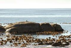 Wybrzeże Afryka - przylądka punkt w głazach Zdjęcia Stock