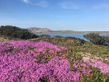 Wybrzeże i plaża w Włochy Sardinia Zdjęcia Royalty Free