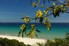 wybrzeże jest małgorzaty Sardynii Zdjęcia Stock