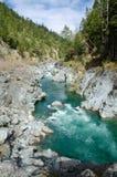 Wybrzeże Pacyfiku sceniczni lasy obrazy stock