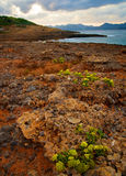 wybrzeże ii skalisty Obrazy Royalty Free