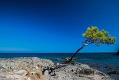 wybrzeże morza Obraz Stock