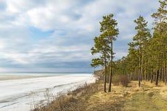 Wybrzeże Ob rzeka z stapianie lodem Fotografia Royalty Free