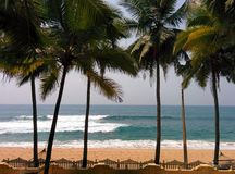 Wybrzeże z drzewkami palmowymi i oceanem Obrazy Stock