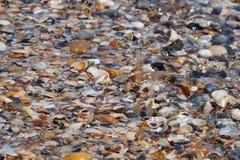 Wybrzeże z seashells Fotografia Royalty Free