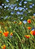wybuch wiosna Zdjęcia Royalty Free